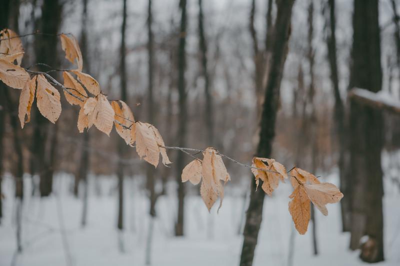 AVS_EcoPreserve_Winter2021-18.jpg