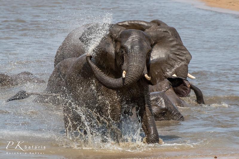BW Bekker PKSafaris Elephants (3 of 4).jpg
