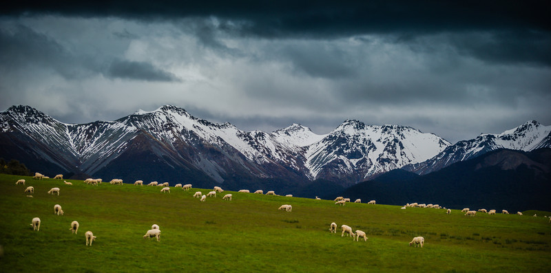 Sheepstorm On the drive down to Te Anau from Queenstown, you pass countless fields of sheep with dramatic mountain backdrops. I think sheep in fields are already pleasant enough to look at, but it gets even better when there is drama in the mountains and drama in the skies!I'm not exactly the Sheep Whisperer yet, but I have noticed that you have to be quiet as a mouse when approaching a fence to take a photo. If just ONE of them gets scared and runs, they ALL get scared and run.- Trey RatcliffClick here to read the rest of this post at the Stuck in Customs blog.