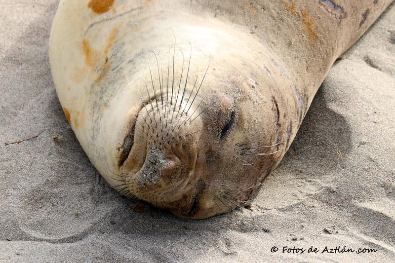 Seal IMG_0905.jpg