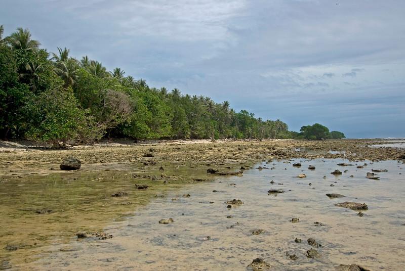 Shoreline Low Tide - Kosrae, FSM