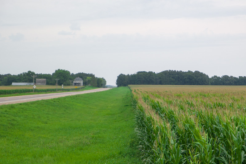 Southern Minnesota Corn Field