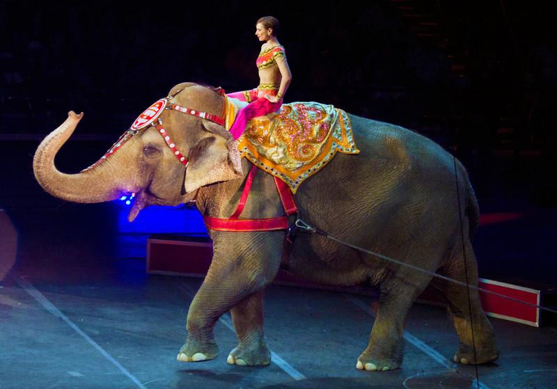 elephantwithladyridersittingupstraight.jpg
