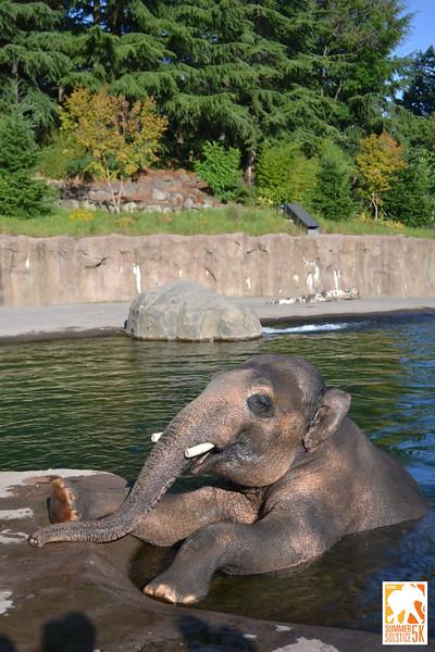 Anzelina-Coodey_Solstice-Run-Oregon-Zoo_006.jpg