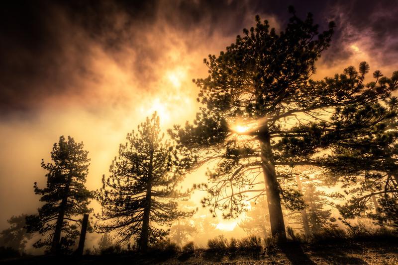 AlikGriffin_Three_Trees_Mount_Baldy.jpg