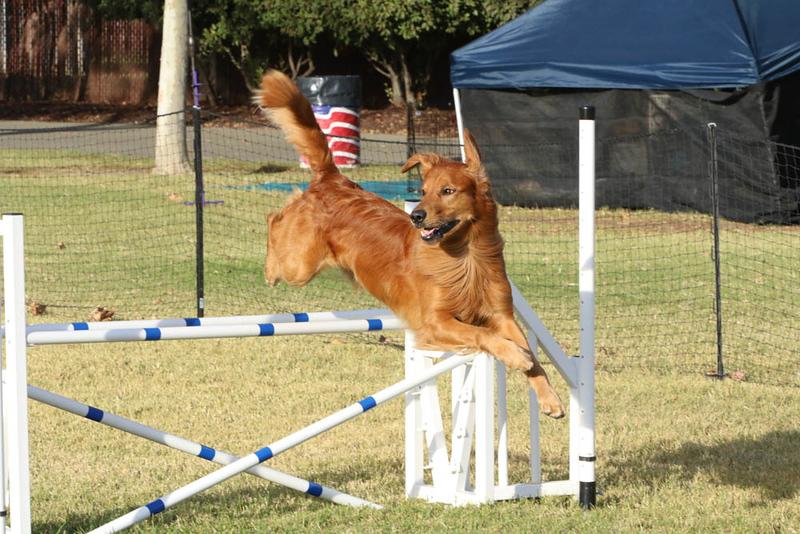 11-4-2018 Border Terrier-2495.jpg