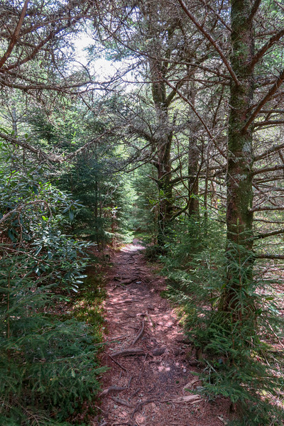 Mountains-to-Sea Trail -- 5,760'
