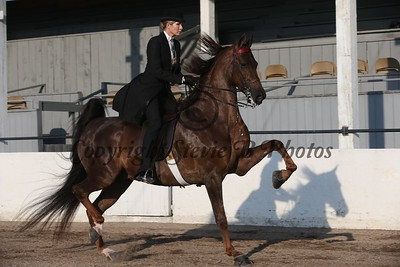 4. Bluegrass Select Open 3 Gaited Park