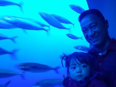 Monterey Aquarium April 2018