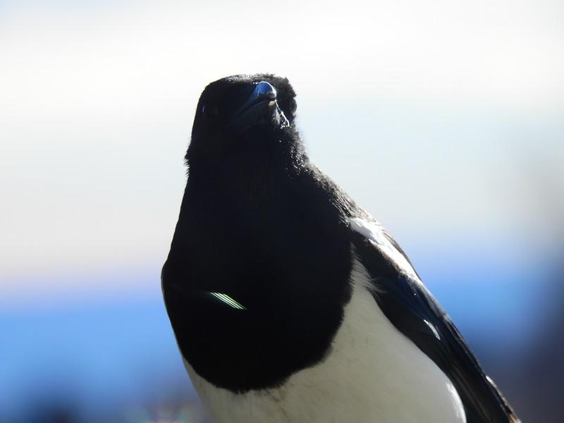 birds (188).JPG