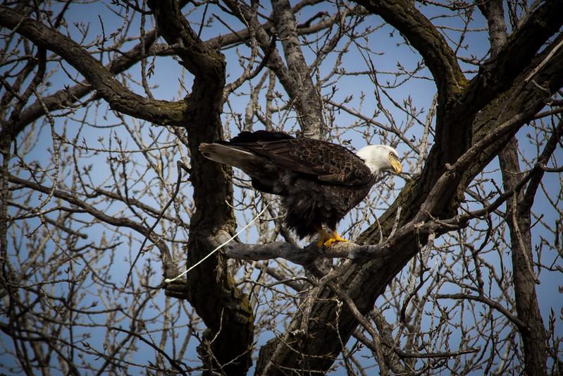 Eagle poo-7049.jpg