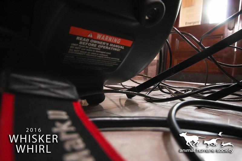 Whisker-1.jpg