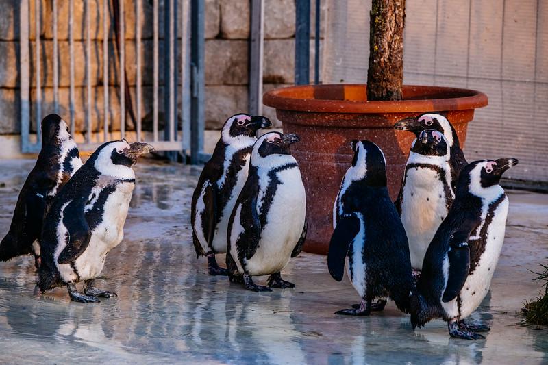 Tonis Zoo-0503.jpg