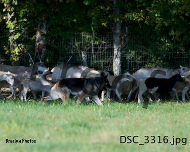 Herding 9/22/19