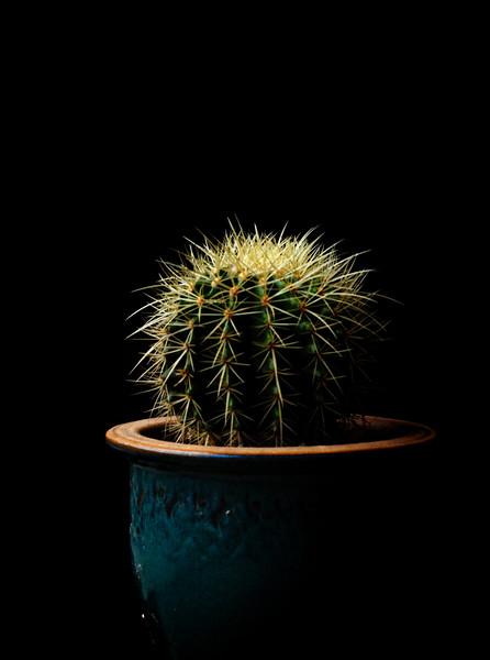 cactus 091719-1.jpg