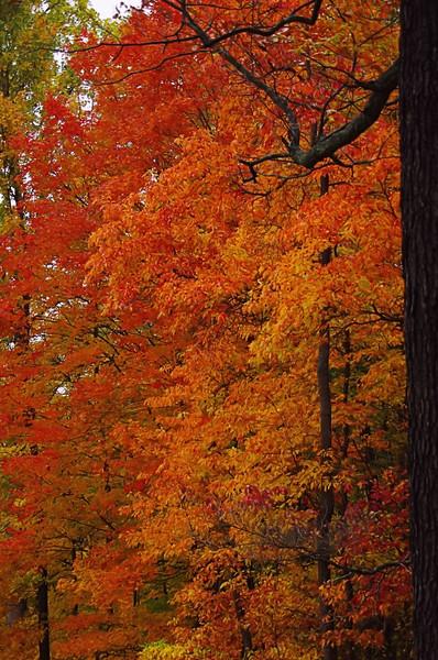 Fire trees.jpg