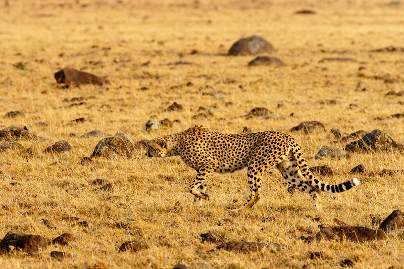 Kenya 2015-09653.jpg