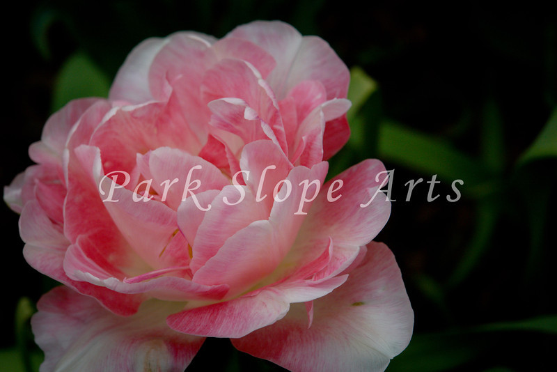 FlowersR-00082.jpg