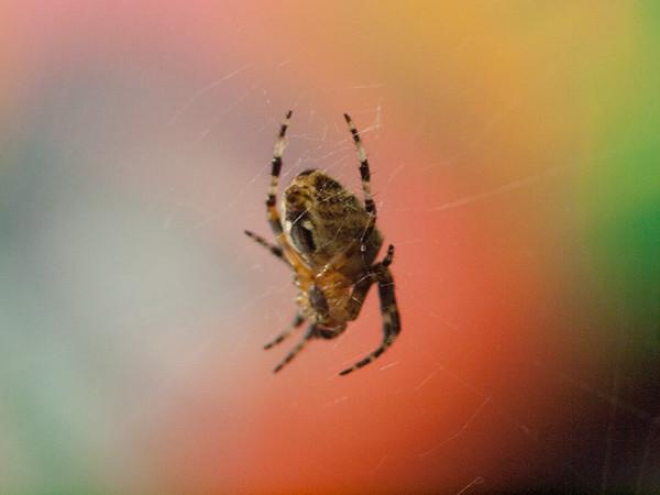 Garden bugs 7-2012