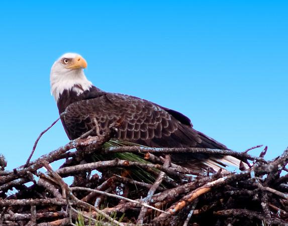 Palm Bay Eagle's Nest - Jan 18, 2010
