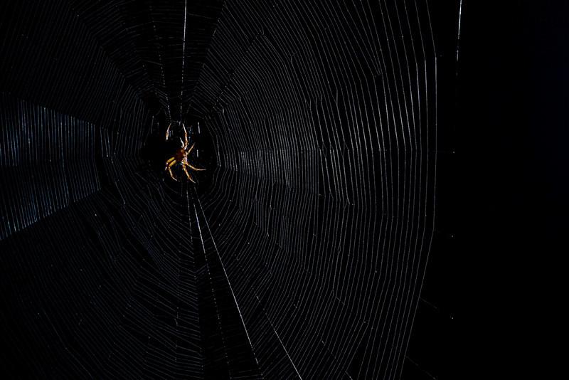 Spiderman-11.jpg