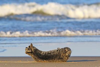 Seal on the beach in Sea Girt 03-03-2021