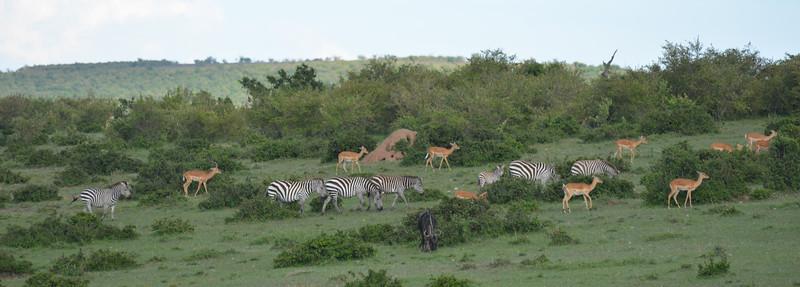 East Africa Safari 164.jpg