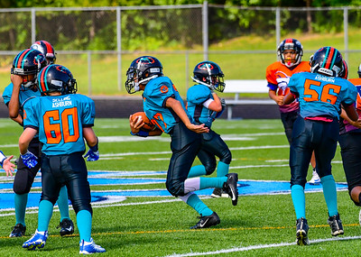 Youth Football: AYFL B_Dolphins vs B_Broncos 08.252018 (by Al Shipman)