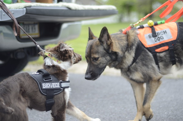Search and Rescue Dogs at Evan