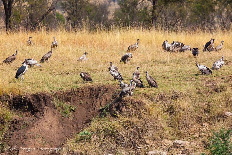 North_Serengeti-85.jpg