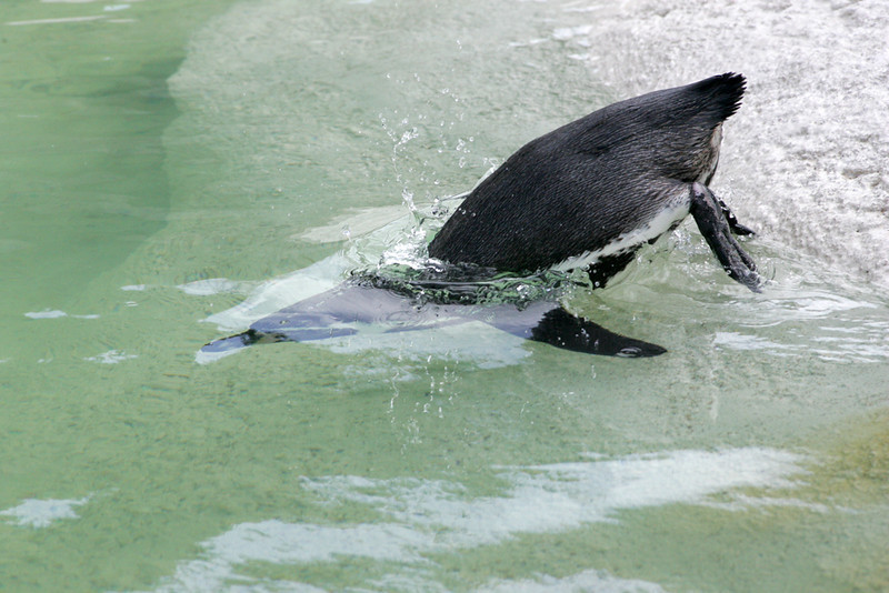 Newquay Zoo 230.jpg