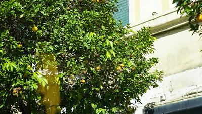 P2P Rome, Amalfi, Naples GALLERY 11