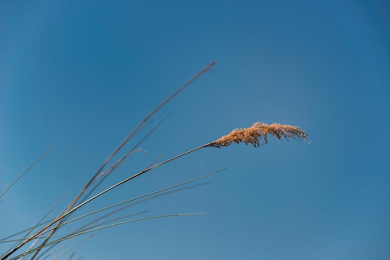 2014-08Aug-Okavango Masters-58-Edit.jpg