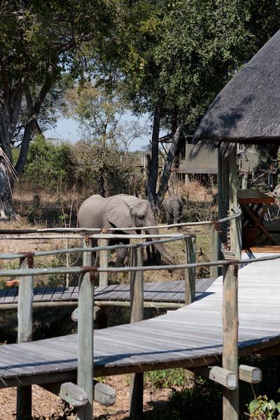 Botswana-20110720-12991.jpg
