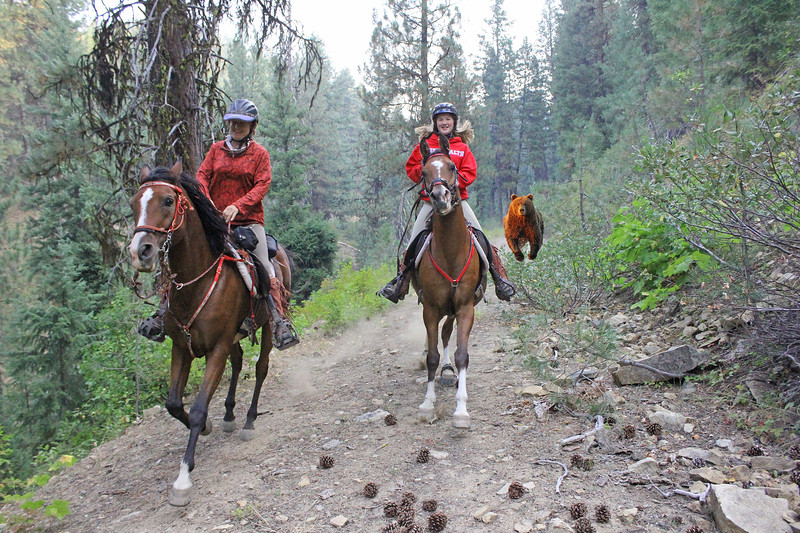 Little did riders at the Old Selam endurance ride know they were being pursued by a grizzly! (or a moose, or cougar, or Olaf!)