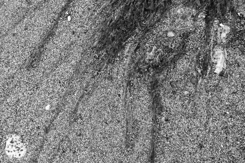 040729-003BW (Abstract; Seaweed, Rock, Tideflats).jpg