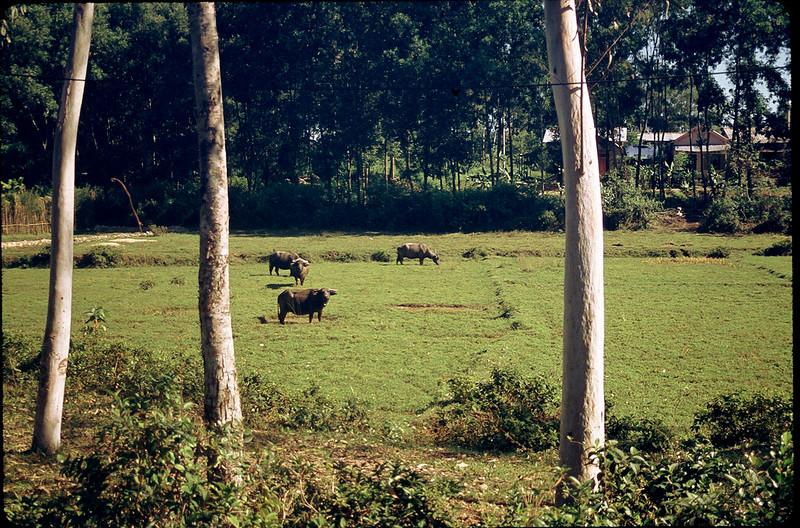 VietnamSingapore1_041.jpg