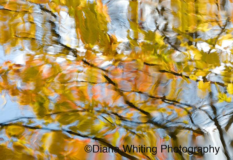 Reflections 2.jpg