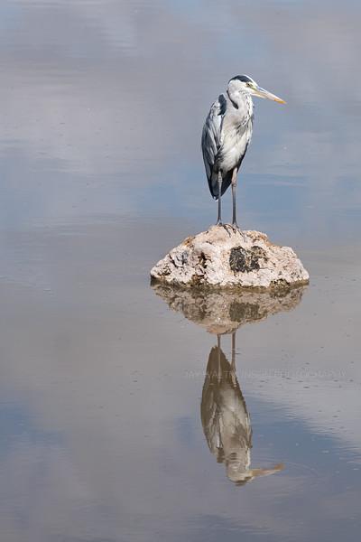 Jay Waltmunson Photography - Kenya 2019 - 150 - (DSCF4152).jpg