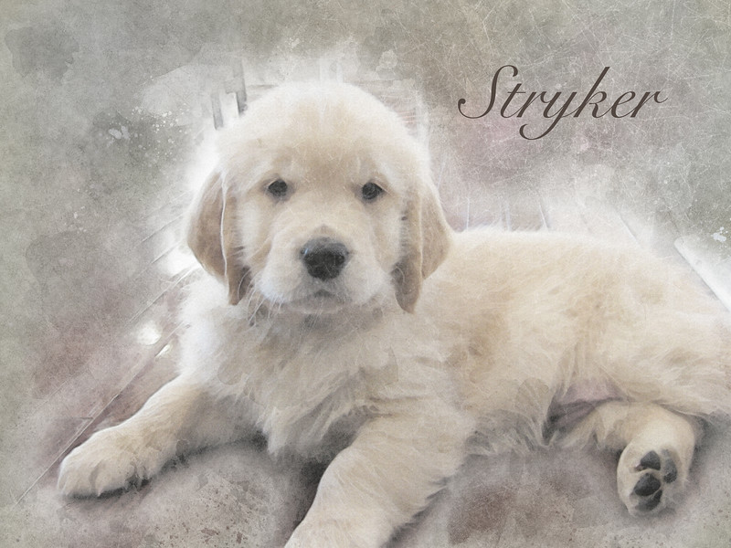 Stryker_Puppy_Grunge_Precise_Titled.jpg