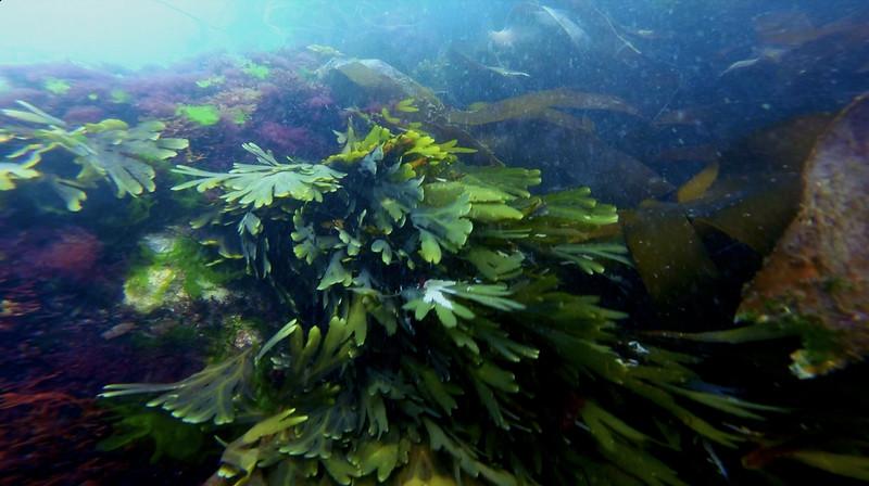 Devon-Underwater-30.jpg