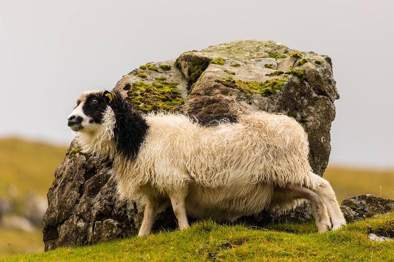 Faroes_5D4-1418.jpg
