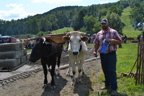 Pomfret Ox Pull  080918