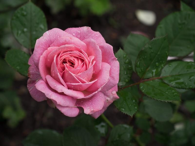 garden_may06-5060064 copy.jpg