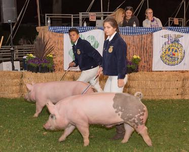 2017 Citrus Fair Swine