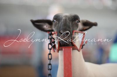 Livestock Judging Contest & Good Housekeeping Awards