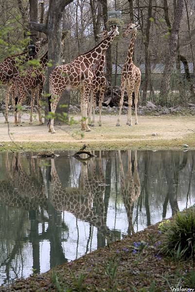 Tierpark, Munich, Germany, 04/04/2019
