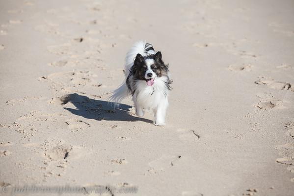 Merlot and Beau Nausett Beach 0914