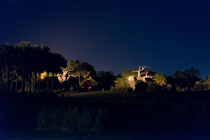 Kilimanjaro Safaris at Night - Disney's Animal Kingdom, Walt Disney World