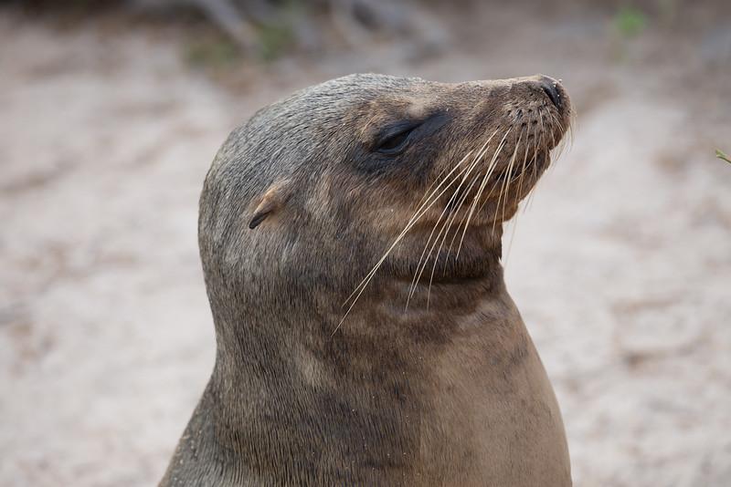 Galapagos_MG_4171.jpg